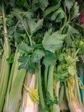 Selleri är tvåårig örtartad art som tillhör Apiaceaefamiljen, infödingen till det medelhavs- området och bekant som en medicina arkivfoto