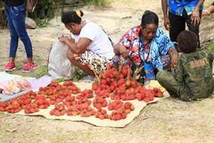 Sellers of rambutan on Mansinam. Sellers of fruit rambutan on Christian celebration of arrival of first missionaries Ottow and Geissler on island Mansinam royalty free stock photo