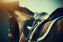 Selli con le staffe su una parte posteriore di un cavallo Fotografia Stock
