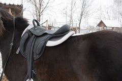 Selli con le staffe su una parte posteriore di un cavallo Immagini Stock Libere da Diritti