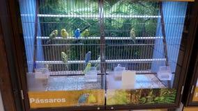 Selling birds Stock Image