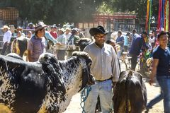 Selling Cattle. A Mexican rancher waits for a buyer at the village cattle market Stock Photo
