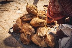 Selling coconuts at the asian market. Ripe coconuts at the asian local market Goa, India Royalty Free Stock Photos