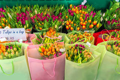 Selling colorful Dutch tulips in the bags, the Netherlands Stock Photography