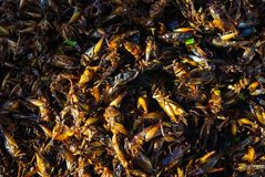 Selling dried orthoptera grasshoppers and locusts stock photos