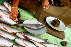 Selling at fish market by manual weighing machine Stock Photography