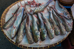 Selling fish in the market. Stock Photos