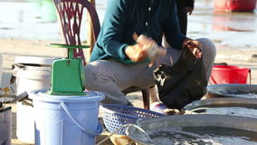 Selling fresh catch seafood on the seashore stock video