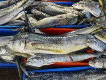 Selling fresh fish in Ancon, north of Lima Royalty Free Stock Photos