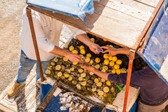 Selling fresh oysters with lemon in a street market. Selling fresh oysters with lemon in street Stock Photos