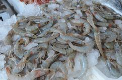 Selling fresh prawns on the scale. Mediterranean frozen seafood. Delicius calories. Kitchen of seas`s tpouristics. Food and drink Stock Image