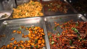 Selling fried insects at the night market in Koh stock footage