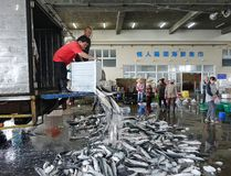 Selling Grey Mullet Fish in Taiwan Stock Photo
