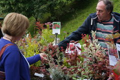 Selling plants. Man at stall selling plants to lady across his display of stock available for sale Royalty Free Stock Image