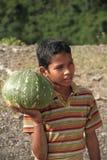 Selling Pumpkin Stock Image