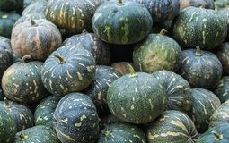 selling pumpkin at the market royalty free stock images