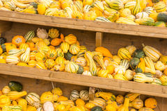 Selling pumpkins at the market royalty free stock photography