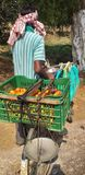 Man selling tomato roadside stock photography
