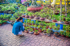 Selling yellow flowers for Tet Stock Images