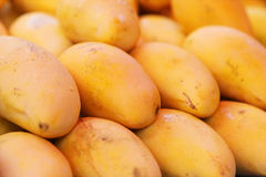Selling yellow mango Stock Images