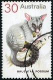 Sello de Australia Imagen de archivo
