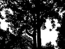 Sello de la naturaleza Foto de archivo