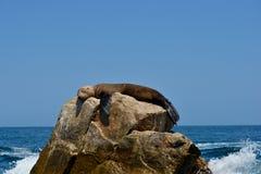 Sello el dormir en una roca contra un cielo azul claro fotos de archivo