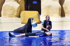 Sello en el acuario con el instructor Fotos de archivo libres de regalías