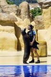 Sello en el acuario que abraza con el instructor Fotos de archivo
