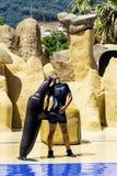 Sello en el acuario que abraza con el instructor Foto de archivo libre de regalías