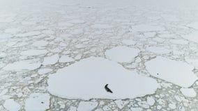 Sello en el iceberg Océano de la Antártida Tiro aéreo almacen de metraje de vídeo