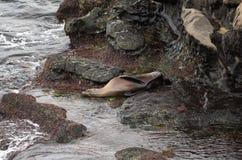 Sello en una roca Imagen de archivo