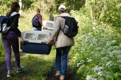 Sellos anillados lanzados zoologistas de Ladoga después de la rehabilitación Foto de archivo libre de regalías