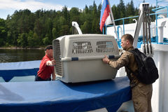 Sellos anillados lanzados zoologistas de Ladoga después de la rehabilitación Imagen de archivo