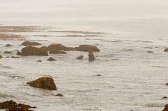 Sellos de elefante en la playa en California foto de archivo