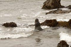 Sellos de elefante en la playa en California imagen de archivo