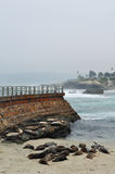 Sellos de puerto de La Jolla Foto de archivo