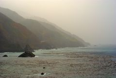 Sellos en el Océano Pacífico fotos de archivo