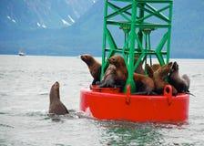 Sellos en la boya en Alaska Fotografía de archivo