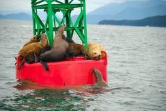 Sellos en la boya en Alaska Fotografía de archivo libre de regalías