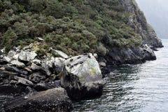 Sellos que se relajan en la roca del sello Fotografía de archivo