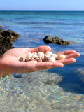 She Sells Sea Shells. Sea shells in a womans hands in front of the sky and water of the mediterranean coastline Stock Images