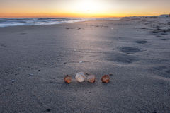 Sells on the sunset beach. Beautiful shells on the beach waiting the summer Stock Photo