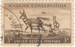 Selo da conservação dos animais selvagens Fotos de Stock Royalty Free