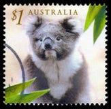 Selo de porte postal do koala de Austrália imagens de stock royalty free