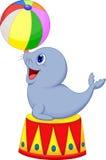 Selo dos desenhos animados do circo que joga uma bola Fotos de Stock Royalty Free