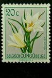 Selo postal de Bélgica Congo Fotos de Stock