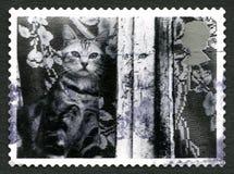Selo postal do Reino Unido do gato Fotografia de Stock Royalty Free