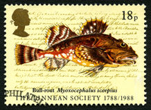 Selo postal do Reino Unido dos peixes da derrota de Bull Fotografia de Stock Royalty Free