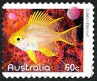 Selo postal dourado do australiano da donzela Fotos de Stock